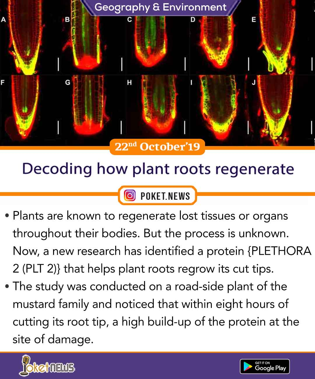 Decoding how plant roots regenerate